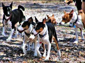 MacMillan_dog_bunch